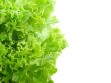 Free Fresh Lettuce Leaves Royalty Free Stock Photo - 14006625