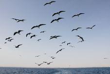 Free Seagulls Royalty Free Stock Photo - 14006695