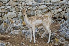 Free Deer Stock Photos - 14007433
