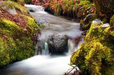 Free Small Stream Royalty Free Stock Photo - 14007715