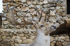 Free Deer Stock Photo - 14007730