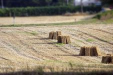 Free Plowed Field Stock Photography - 14008392