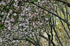 Free Taste Of Spring Stock Photo - 14008490