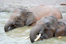 Free Elephant Royalty Free Stock Images - 14009029