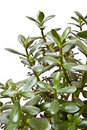 Free Green Leaves Stock Photography - 14010772