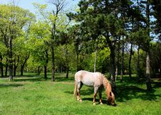 Free Horse Browse In Park Royalty Free Stock Photo - 14010735