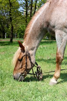 Free Horse Browse In Park Stock Photo - 14010750