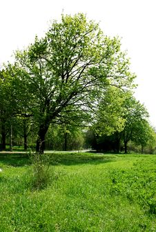 Field Of Grass And Trees Royalty Free Stock Image