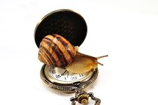 Free Snail On The Clock Royalty Free Stock Images - 14011299