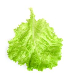 Free Fresh Lettuce Leaf Royalty Free Stock Photo - 14011325