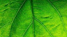 Free Leaf Stock Images - 14011874