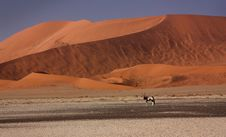 Free Red Dune In Namibia, Africa Royalty Free Stock Photography - 14013057
