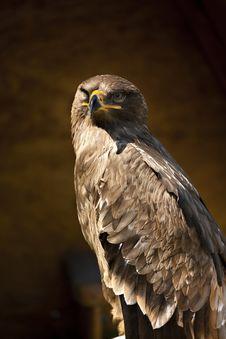 Free Eagle Stock Image - 14013271