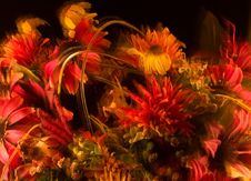 Free Firey Bouquet Royalty Free Stock Photo - 14014485