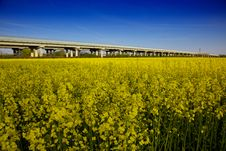 Free Campo Di Canola In Fioritura Stock Photos - 14014733