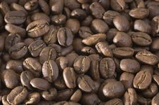Free Coffee Beans Stock Images - 14015034