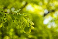 Free Green Leafs Background Stock Photos - 14015103