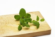 Free Fresh Mint Leaf Royalty Free Stock Photo - 14015465