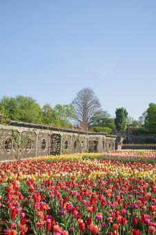 Free Tulip Garden In Spring Bloom Stock Photos - 14016143