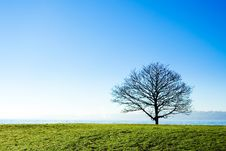 Free Leafless Lonely Tree Stock Image - 14016751