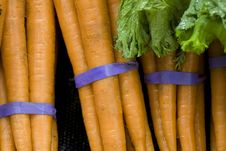 Free Bunches Of Carrots. Stock Photo - 14017260
