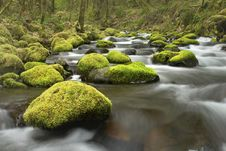 Mossy Rocks In Creek Royalty Free Stock Images