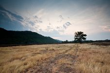 Free Landscape Lonely Tree In The Field Mountain Stock Photo - 14017690