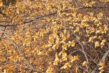 Yellow Dead Leaf Royalty Free Stock Photos