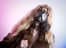 Free Gas Mask Stock Photos - 14019373