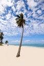 Free Exotic Beach Royalty Free Stock Image - 14025856