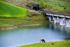 Field Bridge And Lake With Dike And A Cow Stock Photo