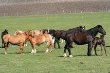 Free Horses Royalty Free Stock Photography - 14021747