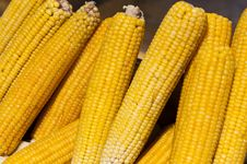 Free Cobs Of Corn Royalty Free Stock Photography - 14021807