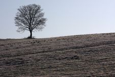 Free Lonely Tree Royalty Free Stock Photography - 14022147