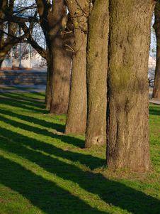 Free Shade From Trees Royalty Free Stock Photo - 14022345