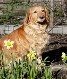 House Dog In Spring Flowers