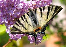 Free Beautiful Butterfly Stock Photos - 14025083