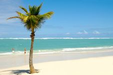 Free Exotic Beach Stock Images - 14025834