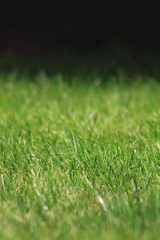 Free Green Grass Stock Photos - 14026053