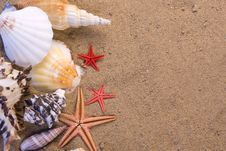 Free Starfish, Seashells Stock Photography - 14026262