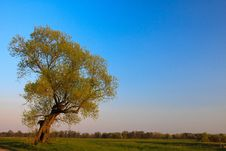 Free Lone Tree Royalty Free Stock Images - 14026739