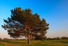 Free Lone Tree Stock Photos - 14026763