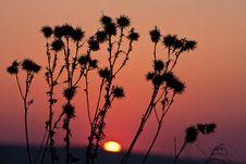 Free Sunset Grass Stock Image - 14026861