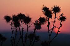 Free Sunset Grass Royalty Free Stock Photo - 14026885