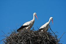 Free Storks In Nest Stock Photography - 14026942