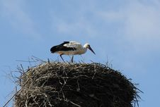 Free Stork In The Nest Stock Images - 14027064
