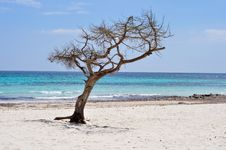 Free Lonely Tree Royalty Free Stock Photography - 14027367