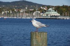 Free Seagull Of Profile On Pier. Stock Photos - 14027943