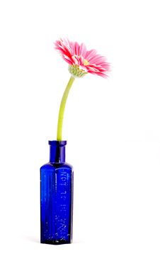 Free Pink Gerber Daisy In Blue Bottle Royalty Free Stock Image - 14028826