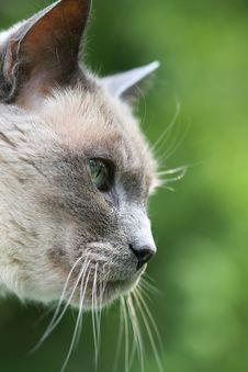 Free Grey Cat Profile Stock Photos - 14028873